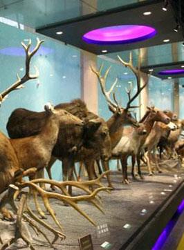 动物博物馆